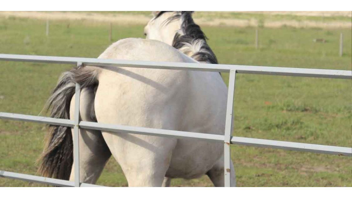 Why is your horse scratching?