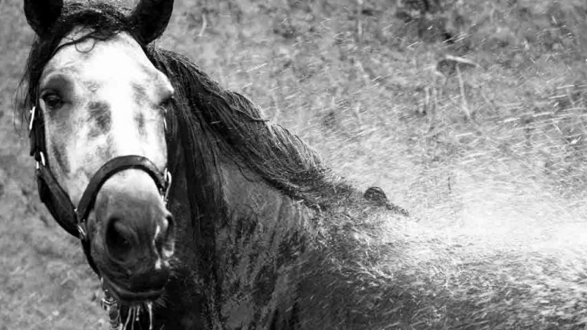 Tips: showering your horse during winter